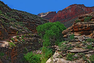 Blick vom Bright Angel Trail hinauf zum South Rim August 2010