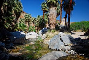 Palm Canyon, Indian Canyons, Kalifornien